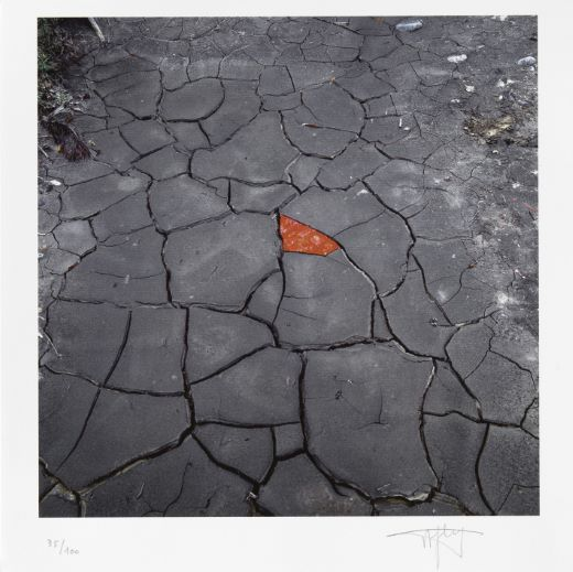 estampes Red leaves on cracked Andy Goldsworthy