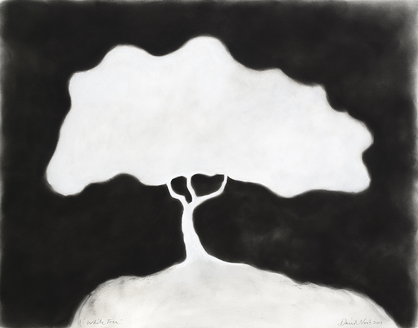 oeuvres White Tree David Nash