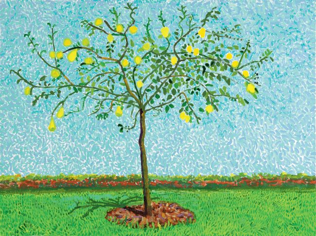 oeuvres Quince Tree David Hockney